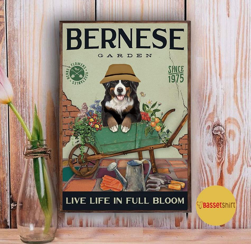 Bernese Mountain garden live life in full bloom poster canvas Vintage