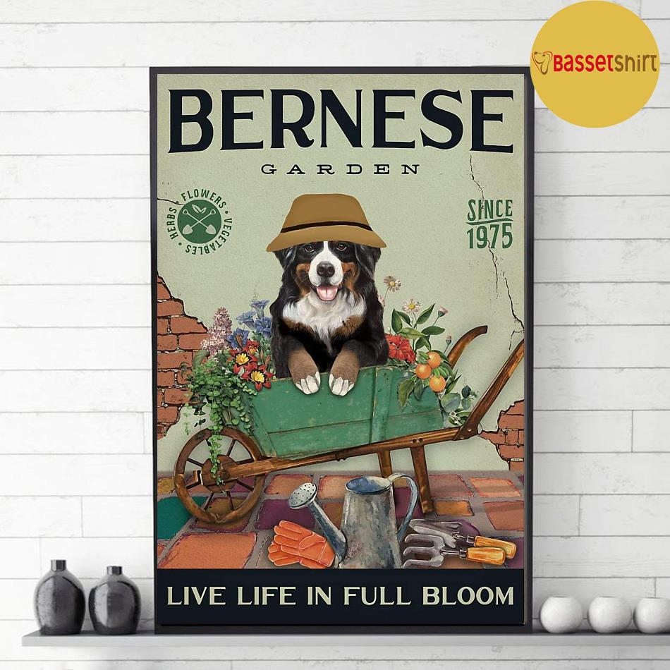 Bernese Mountain garden live life in full bloom poster canvas decor