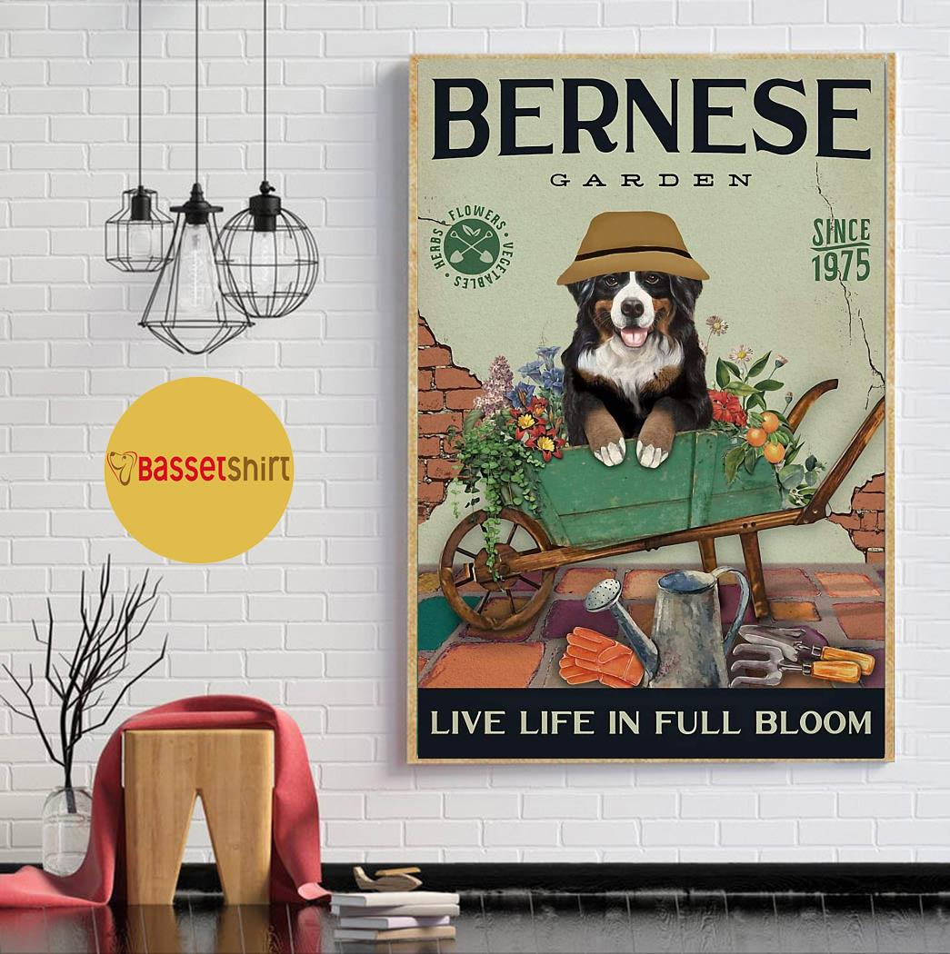 Bernese Mountain garden live life in full bloom poster canvas
